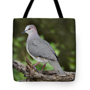White-tipped Dove Tote Bag