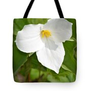 Spring In The Northwoods Tote Bag