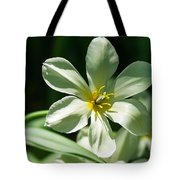 White Tulip Wide Open - Featured 3 Tote Bag