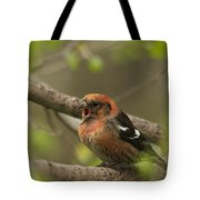 White-winged Crossbill Tote Bag