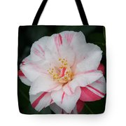 White With Pink Camellia Tote Bag