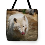 White Wolf Licking His Chops Tote Bag
