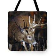 White-tailed Deer Antler Shadow Tote Bag