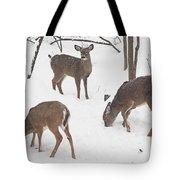 Whitetail Deer In Snowy Woods Tote Bag