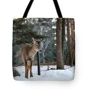 Whitetail In Woods Tote Bag
