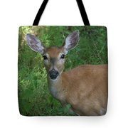 Whitetail Portrait In Valley Forge National Park Tote Bag