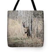 Whitetail Undercover Tote Bag