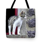 Who Goes There - Kitten Tote Bag
