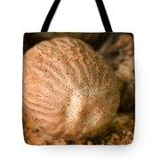 Whole Nutmeg Nuts Tote Bag