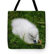 Whooper Swan Juvenile  Tote Bag
