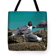 Why You Looking? Tote Bag