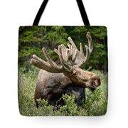 Wild Bull Moose Tote Bag