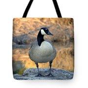 Wild Canadian Goose Tote Bag