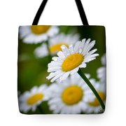 Wild Daisies After The Rain Tote Bag