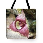 Wild Ginger Flower - Asarum Canadense Tote Bag
