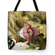 Wild Ginger Wildflower - Asarum Canadense Tote Bag
