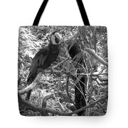 Wild Hawaiian Parrot Black And White Tote Bag