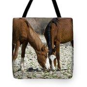 Wild Horses Grazing  Tote Bag