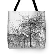 Wild Springtime Winter Tree Black And White Tote Bag by James BO  Insogna