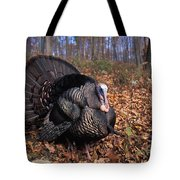 Wild Turkey Displaying Tote Bag by Len Rue Jr