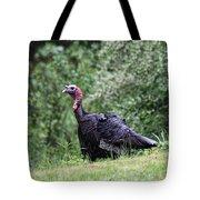 Wild Turkey Tote Bag by Karol Livote