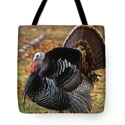 Wild Turkey Male Displaying Long Island Tote Bag
