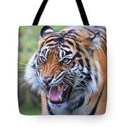 Wildcat IIi Tote Bag