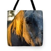 Will You Be Back Tomorrow Tote Bag