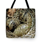 Willet Catoptrophorus Semipalmatus Eggs Tote Bag