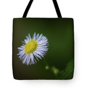 Willow Aster Tote Bag