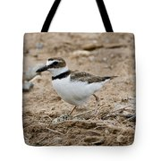 Wilsons Plover At Nest Tote Bag