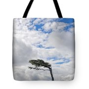 Wind-bent Flag Tree In Tierra Del Fuego Tote Bag