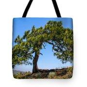 Lonesome Pine Tree Tote Bag