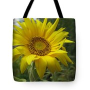 Windblown Sunflower Two Tote Bag