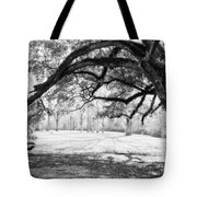 Window Oak - Bw Tote Bag