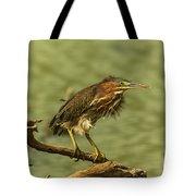 Windy Morn Green Heron Tote Bag