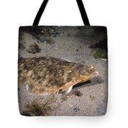 Winter Flounder Tote Bag
