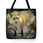 Winter Nature At Howell Nature Center Tote Bag