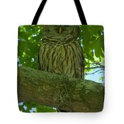 Winter Park Owl Tote Bag