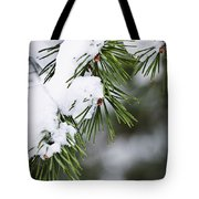Winter Pine Branches Tote Bag
