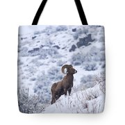 Winter Ram Tote Bag