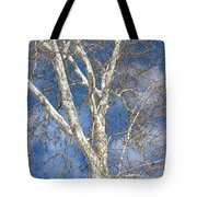 Winter Sycamore Tote Bag