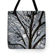 Winter Tree 1 Tote Bag