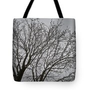 Winter Tree 6 Tote Bag