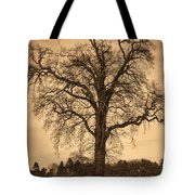 Winter Tree - Old Tote Bag