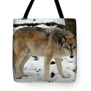 Winter Wolf In The Snow Tote Bag