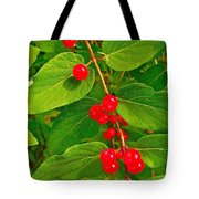 Winterberry Along Rivier Du Nord Trail In The Laurentians-qc Tote Bag