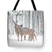 Winters Love Tote Bag
