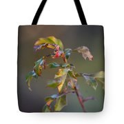 Winter's Oak Sapling Tote Bag