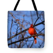 Winter's Red Beauty 5 Tote Bag